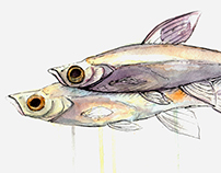 Fishy Illustrations