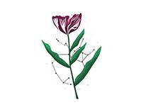 Sagitaire et Tulipe