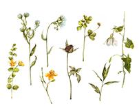 Transylvania botanical treasure / sketchbook