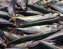 Fish market - Venice