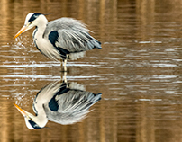 Wildlife reflection