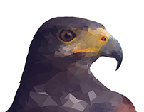 Project Poly | Falcon