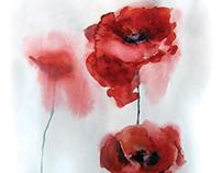 Watercolor paintings of poppies