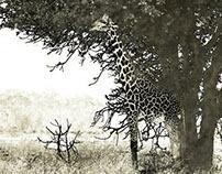 Co Zambie Peintography
