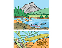 Scheme about aquatic bioindicators for Wapiti magazine