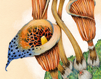 Botanical • A new mushroom