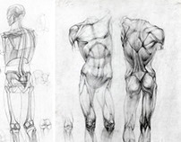 Anatomy drawing