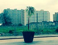Lost Palmas