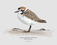 Scientific Illustration: Birds