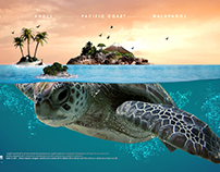 All You Need Is Ecuador - Turtle