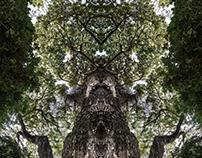 Entidades- Bosques