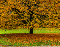 Brussels - Atomium & Osseghem Park Laeken