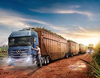 Sugarcane - Mercedes-Benz