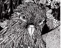 Falcon Ink Illustration