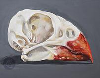 Cardinal Skull