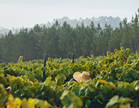 Harvest Luis Pato