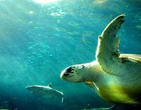 New Insight into Loggerhead Turtle Migration