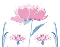 Pivoine & Centaurées ● Illustration