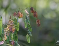 Grass, Central Park 10/5/2014