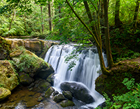 A tranquil view of Watcom Falls