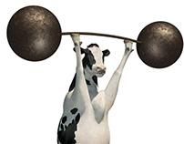The Calcium Cows