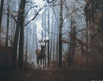Kingdom of deers