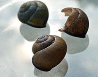 Mollusc shell#2