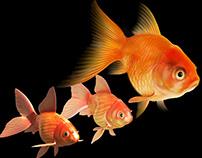CG Goldfish