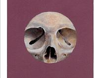 Circle Crop Skull: Colored Pencil (2016)