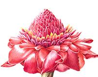 Botanical illustrations 2017