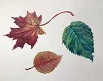 Gouache Leaves