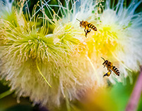 Busy bees...