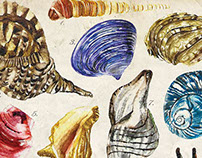 Seashells Planche