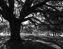 O Assobiador - Árvore europeia ano 2018