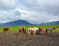Iceland road trip photo reportage