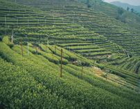 Hangzhou Tea Field