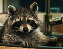 Raccoon the dishwasher campaign