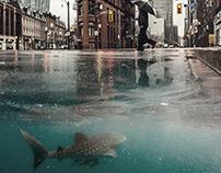 Shark need alive.