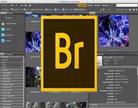 Download Adobe Bridge CC Full Crack