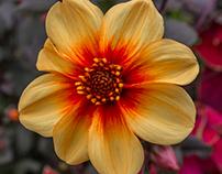 Flower's Paradise