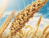 Portfólio de produtos para trigo BASF