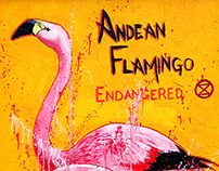 Andean Flamingoes