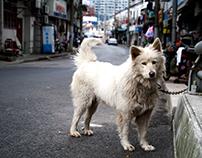 SHANGHAI 2016-2017 PART III