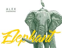 ENGRAVING - ELEPHANT