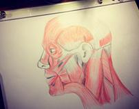 Ilustração Face Humana