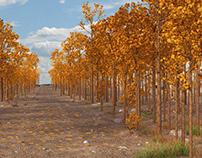 Autumn path environment