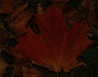 Fall Forward