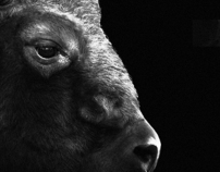 The Bison and the Paradigm of Form