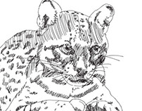 Brazilian Rain Forest Animals illustrations
