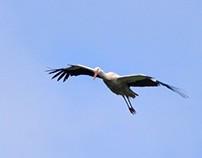 Stork castle